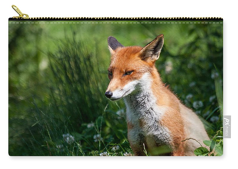 British Wildlife Centre Carry-all Pouch featuring the photograph A British Red Fox by Dawn OConnor