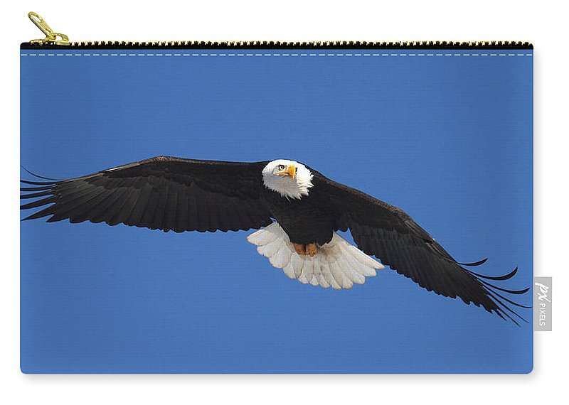 Doug Lloyd Carry-all Pouch featuring the photograph Alaska Bald Eagle by Doug Lloyd