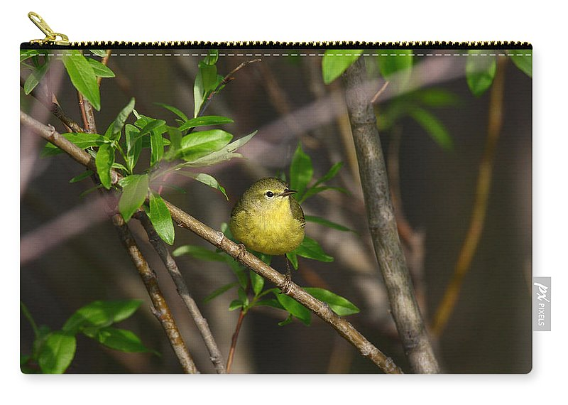 Doug Lloyd Carry-all Pouch featuring the photograph Yellow Warbler by Doug Lloyd