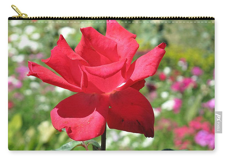 Beautiful Carry-all Pouch featuring the photograph A Beautiful Red Flower Growing At Home by Ashish Agarwal