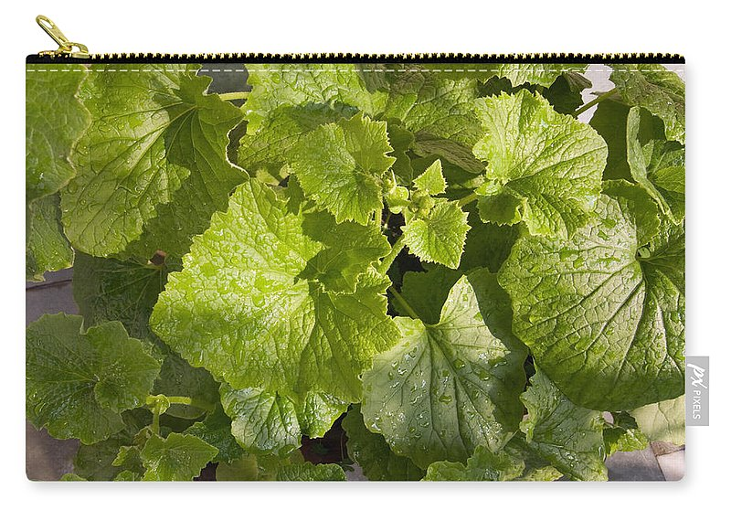 Plant Carry-all Pouch featuring the photograph A Green Leafy Vegetable Plant After Watering In Bright Sunrise by Ashish Agarwal
