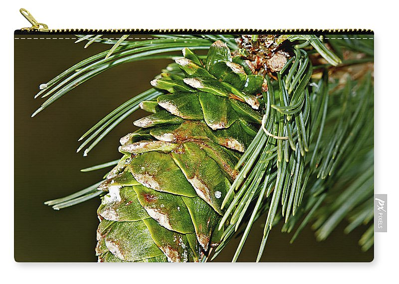 Pine Carry-all Pouch featuring the photograph A Growing Pine Cone by Phyllis Denton