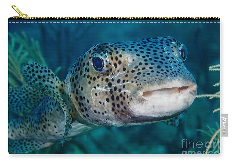 Fish Carry-all Pouch featuring the photograph A Large Spotted Pufferfish by Terry Moore