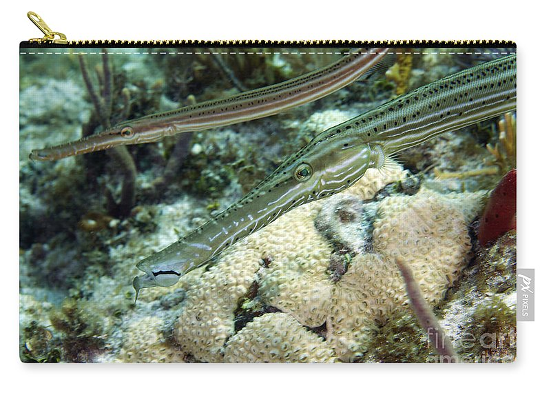 Sea Life Carry-all Pouch featuring the photograph A Pair Of Trumpetfish Off The Coast by Terry Moore