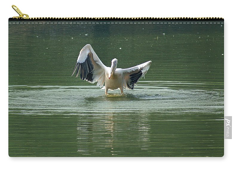 Delhi Carry-all Pouch featuring the photograph A Pelican Drying Its Wings After Landing In The Lake Inside Delhi Zoo by Ashish Agarwal