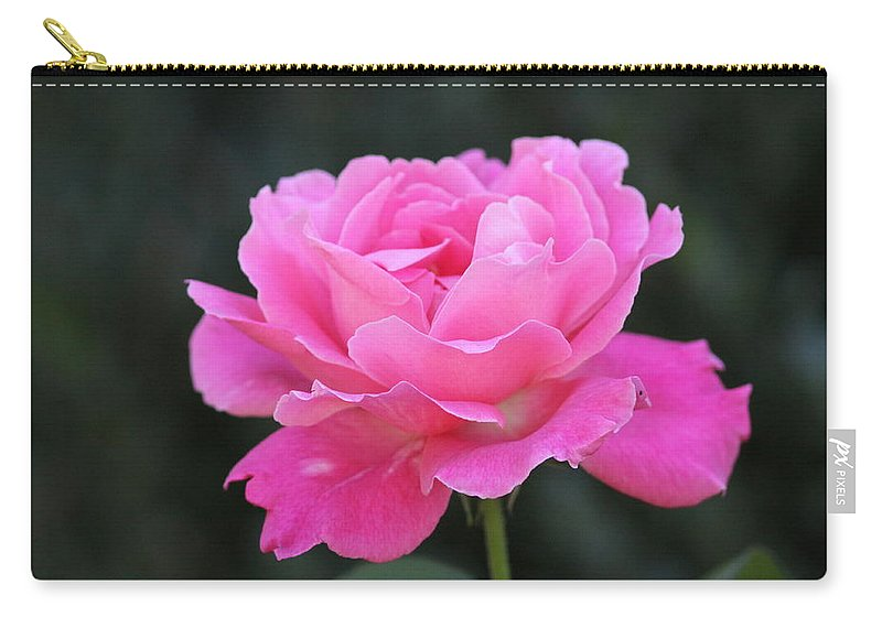 Prints Carry-all Pouch featuring the photograph A Rose by Travis Truelove