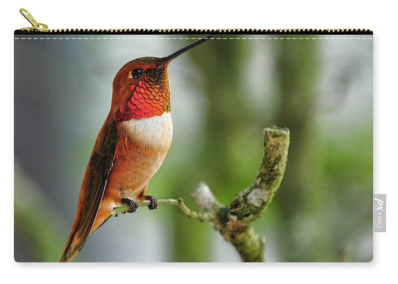 Rufous Carry-all Pouch featuring the photograph A Rufous Hummingbird Perched by Bill Dodsworth