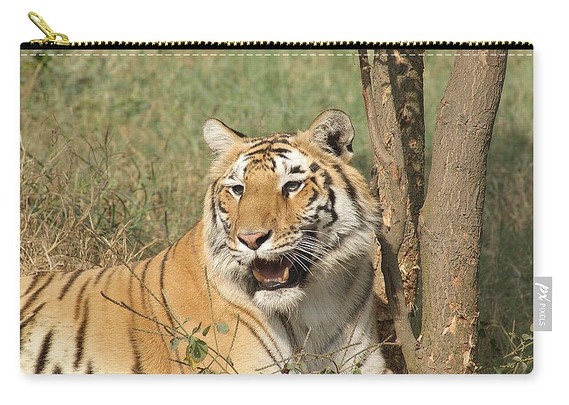 Tiger Carry-all Pouch featuring the photograph A Tiger Lying Casually But Fully Alert by Ashish Agarwal