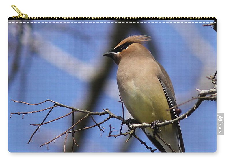 Cedar Waxwing Carry-all Pouch featuring the photograph A Touch Of Class by Travis Truelove