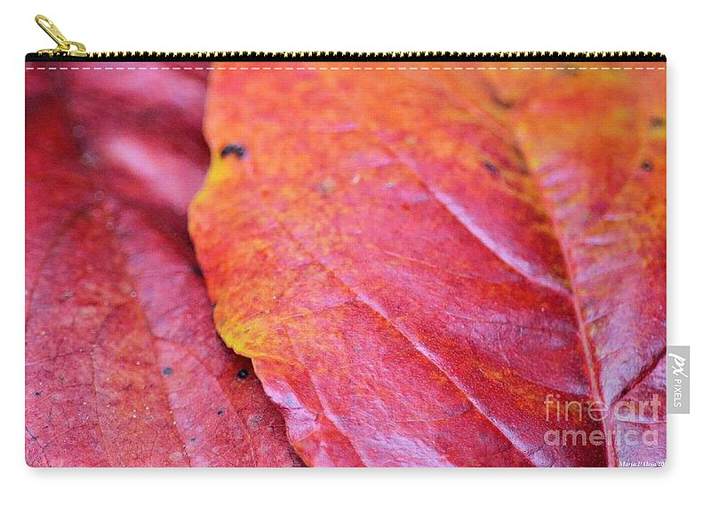 Abstract Dogwood In Autumn Carry-all Pouch featuring the photograph Abstract Dogwood In Autumn by Maria Urso