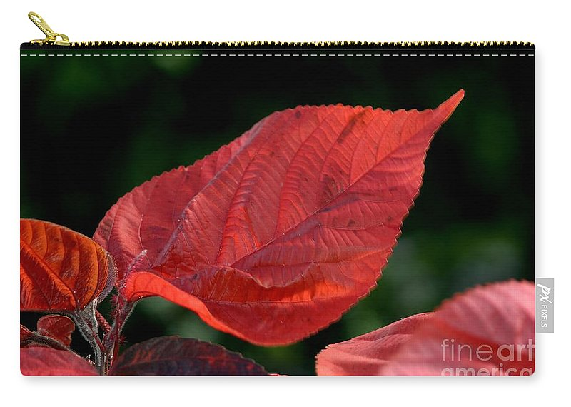 Plant Carry-all Pouch featuring the photograph Acalypha by Living Color Photography Lorraine Lynch