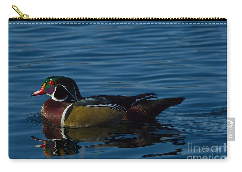 Adult Carry-all Pouch featuring the photograph Adult Male Wood Duck by Scott Hervieux