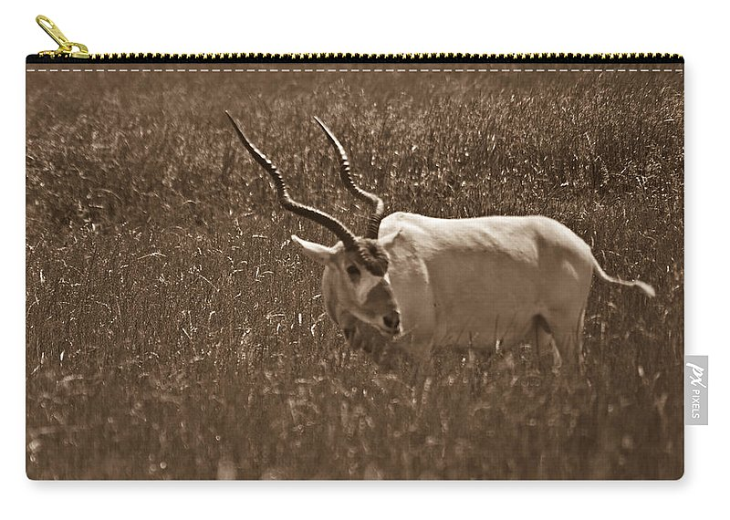 Africa Carry-all Pouch featuring the photograph African Grassland Feeder by Douglas Barnett