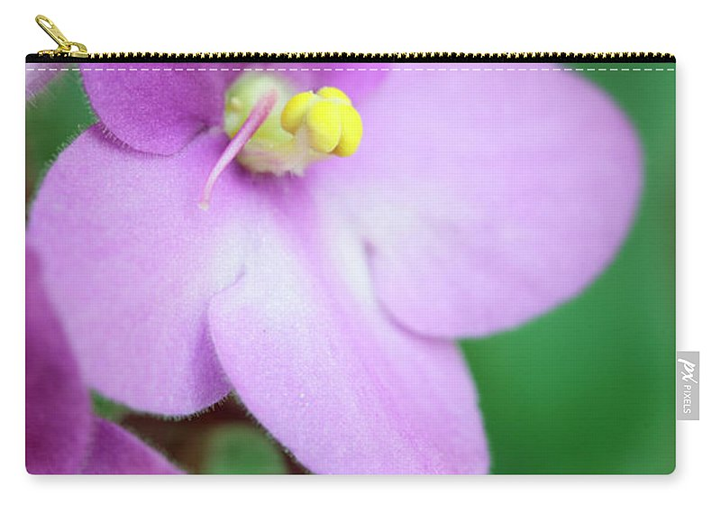 Saintpaulia Carry-all Pouch featuring the photograph African Violet Flower by Neil Overy