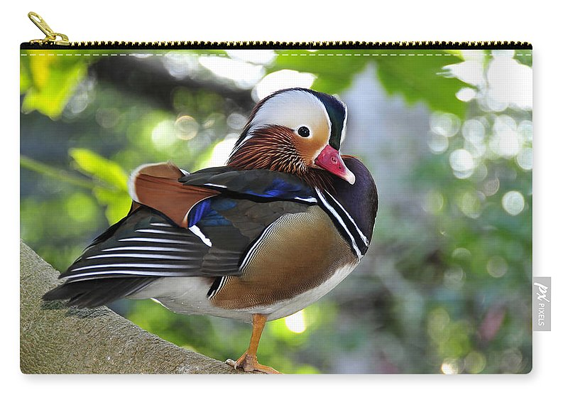 Fine Art Photography Carry-all Pouch featuring the photograph Aix Galericulata by David Lee Thompson