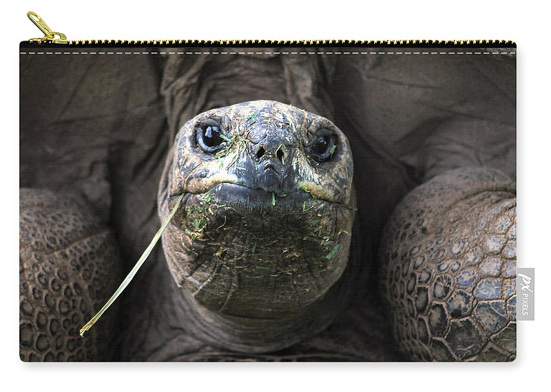 Turtle Carry-all Pouch featuring the photograph Aldabra Tortoise by CJ Clark