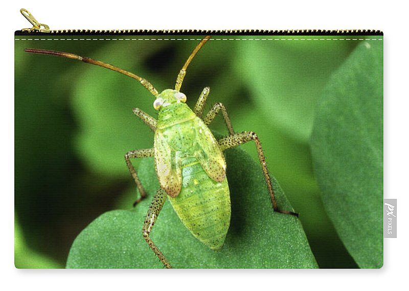 Alfalfa Plant Bug Carry-all Pouch featuring the photograph Alfalfa Plant Bug by Science Source