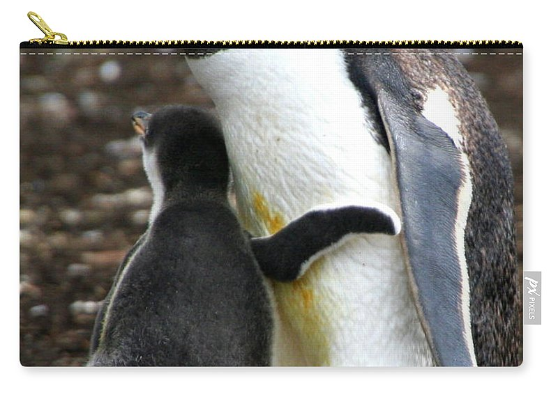 Gentoo Carry-all Pouch featuring the photograph All I Need Is A Hug by Laurel Talabere