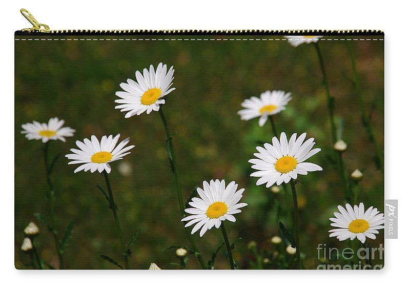 Daisies Carry-all Pouch featuring the photograph All The Dasies by Susanne Van Hulst