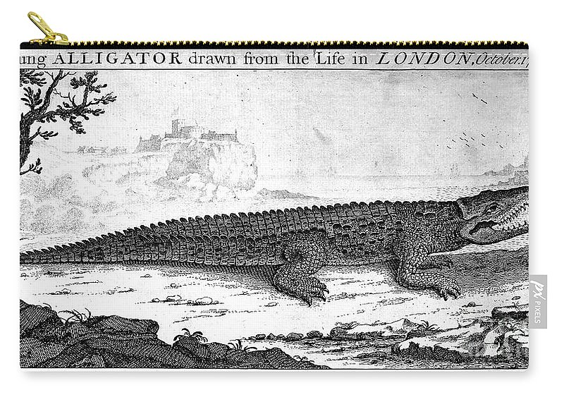 1752 Carry-all Pouch featuring the photograph Alligator by Granger