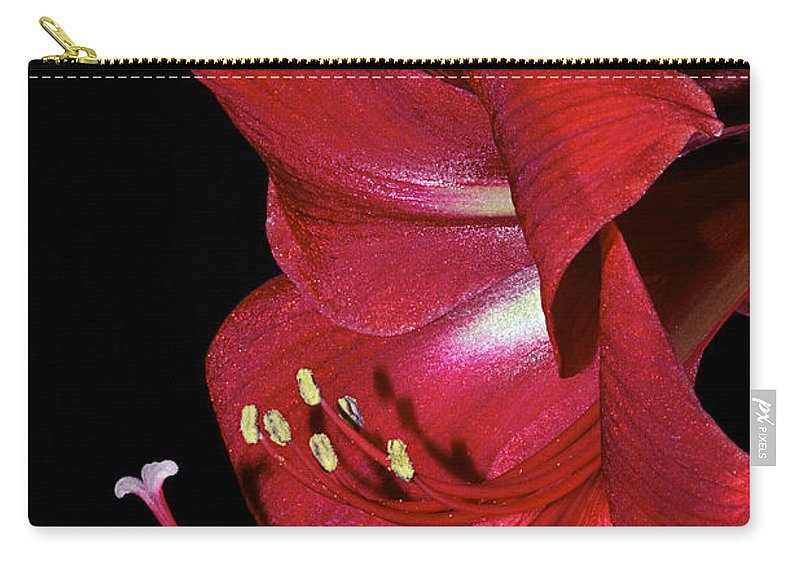 Amaryllis Carry-all Pouch featuring the photograph Amaryllis Flower Side View by Phyllis Denton