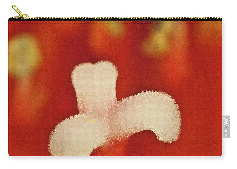 Amaryllis Carry-all Pouch featuring the photograph Amaryllis by Heiko Koehrer-Wagner