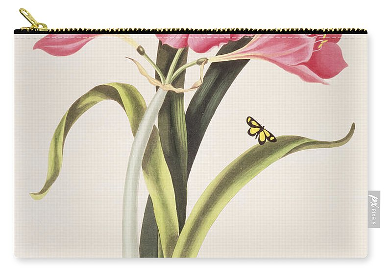 Amaryllis Purpurea Carry-all Pouch featuring the painting Amaryllis Purpurea by Robert Havell
