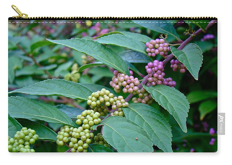American Beautyberry Carry-all Pouch featuring the photograph American Beautyberry Shrub - Callicarpa Americana by Mother Nature