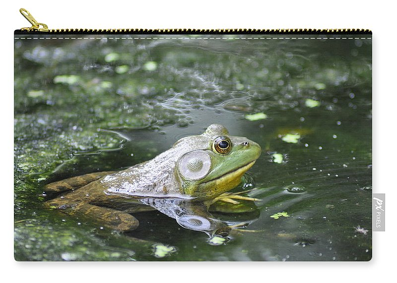 Frog Carry-all Pouch featuring the photograph American Bull Frog by Bill Cannon