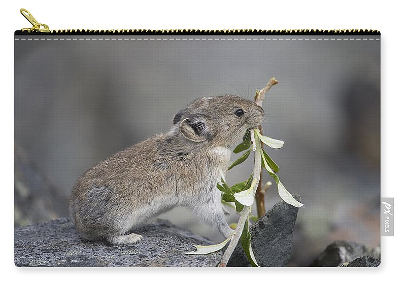 Mp Carry-all Pouch featuring the photograph American Pika by Michael Quinton