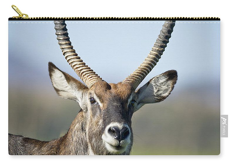 African Wildlife Carry-all Pouch featuring the photograph An Antelope Standing Amongst Tall by David DuChemin