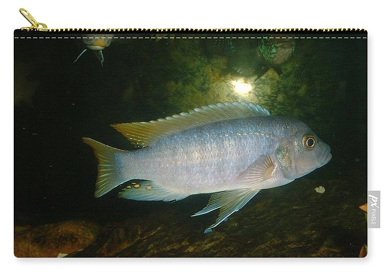 Fish Carry-all Pouch featuring the photograph Aquarium Life by Bonfire Photography
