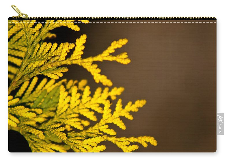 Notecard Carry-all Pouch featuring the photograph Arbovitae Fan 1 by Douglas Barnett