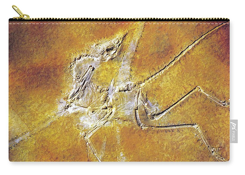 Fossil Carry-all Pouch featuring the photograph Archaeopteryx Lithographica by Photo Researchers