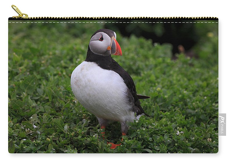 Atlantic Carry-all Pouch featuring the photograph Atlantic Puffin by Louise Heusinkveld