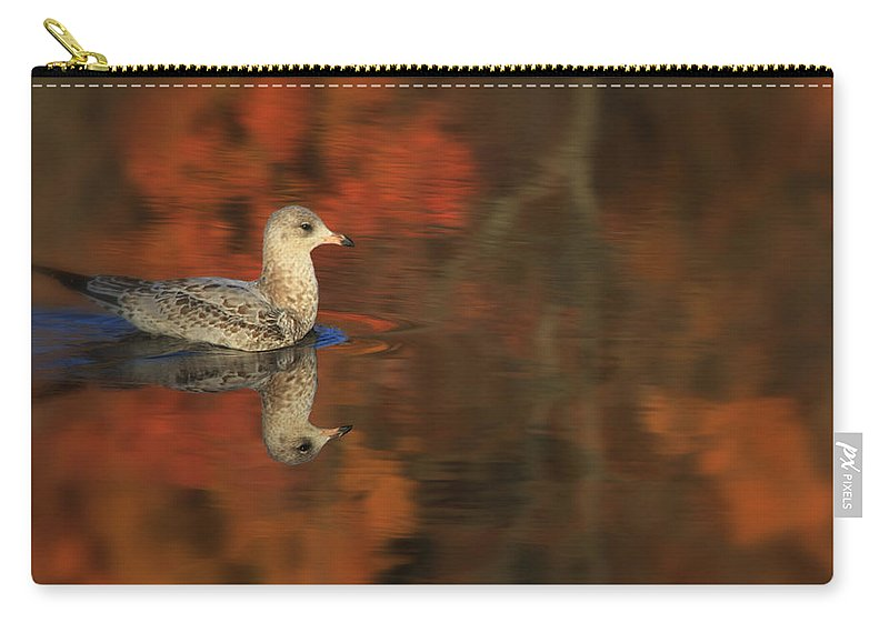 Seagull Carry-all Pouch featuring the photograph Autumn Gull by Karol Livote
