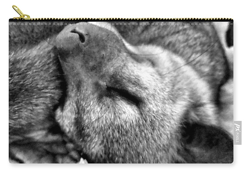 Kinkajou Carry-all Pouch featuring the photograph B W Slumber by Art Dingo
