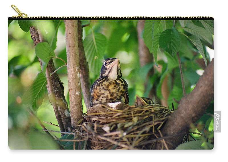 Birds Carry-all Pouch featuring the photograph Baby Birds by CJ Clark