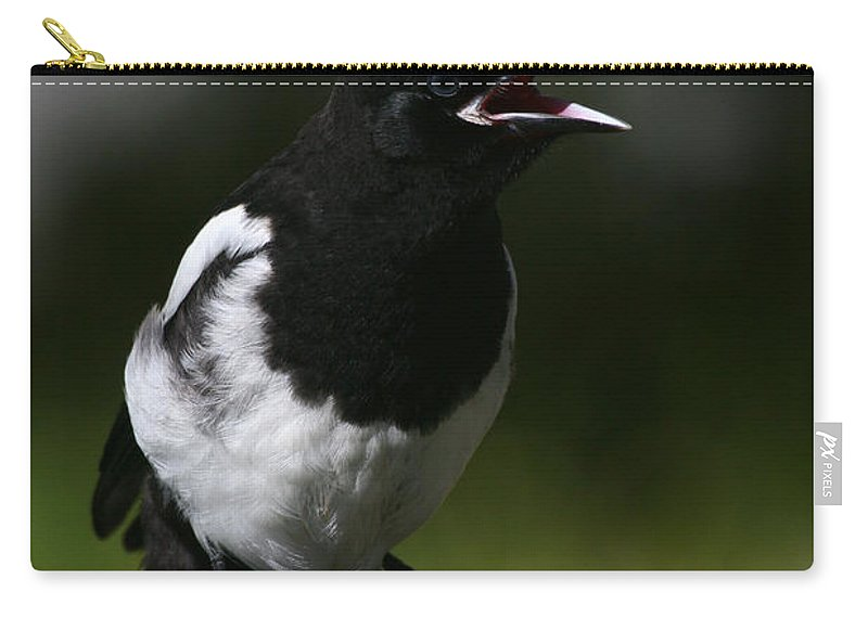 Alaska Carry-all Pouch featuring the photograph Baby Blackbilled Magpie by Doug Lloyd