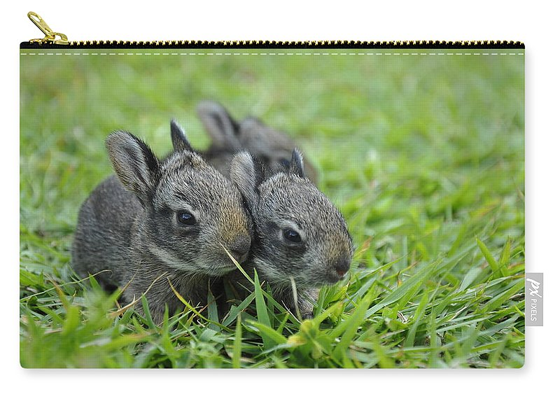 Baby Bunnies Carry-all Pouch featuring the photograph Baby Bunnies by Christine Stonebridge
