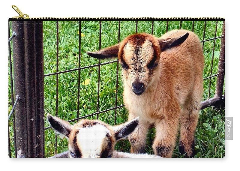 Baby Carry-all Pouch featuring the photograph Baby Goats by Art Dingo