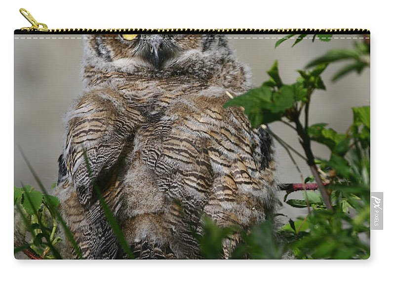 Alaska Carry-all Pouch featuring the photograph Baby Great Horned Owl by Doug Lloyd