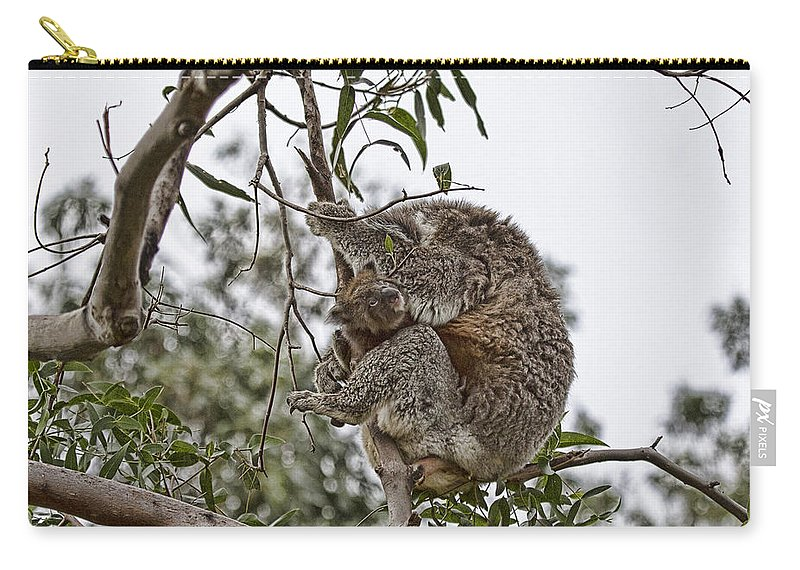 Baby Koala Carry-all Pouch featuring the photograph Baby Koala by Douglas Barnard