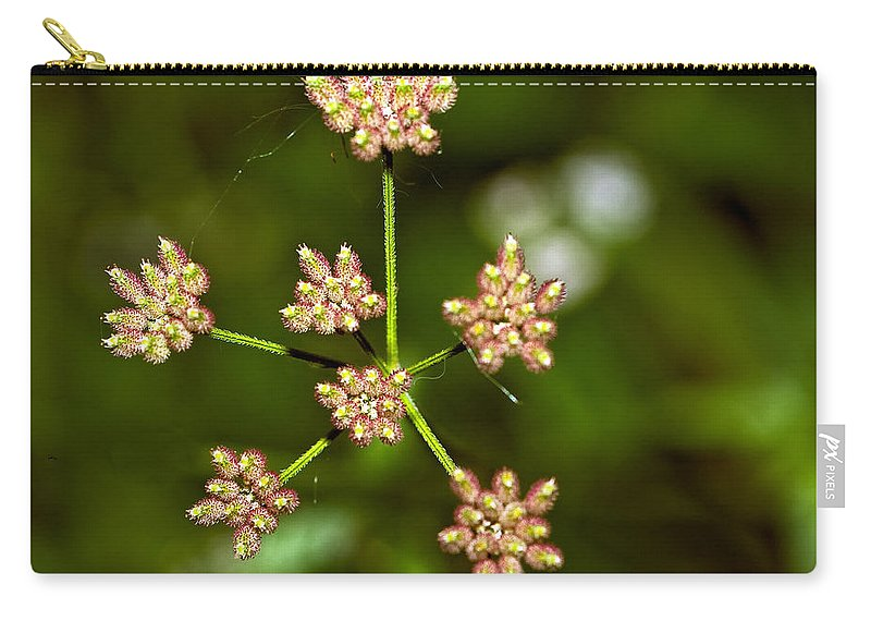 Flowers Carry-all Pouch featuring the photograph Baby Queen Anne's Lace by Steve Harrington