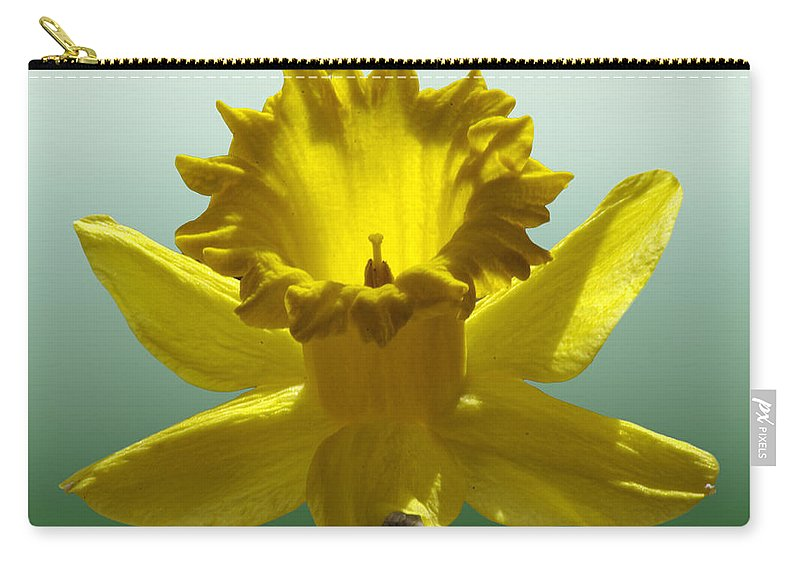 2d Carry-all Pouch featuring the photograph Backlit Daffodil by Brian Wallace