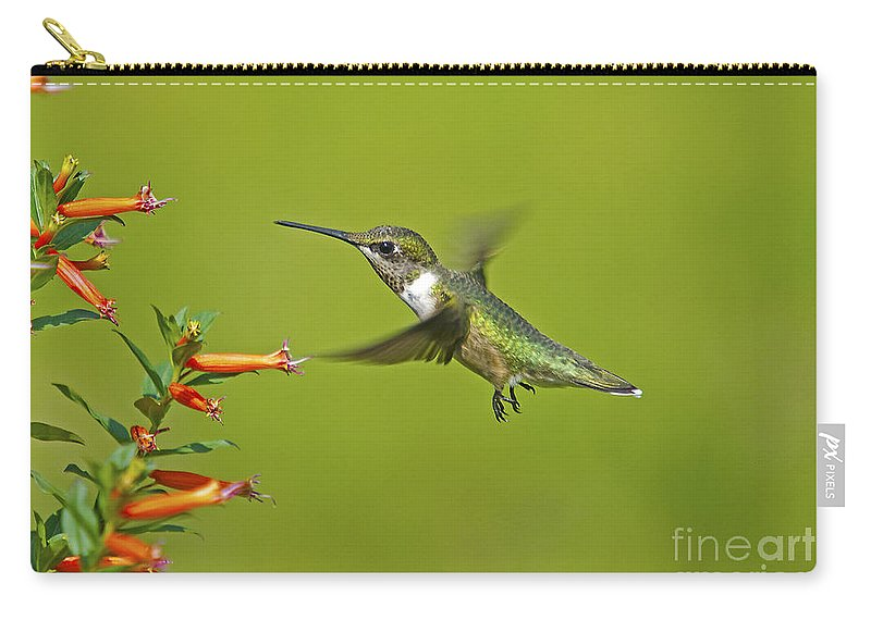 Hummingbird Carry-all Pouch featuring the photograph Backyard Buddy by TJ Baccari