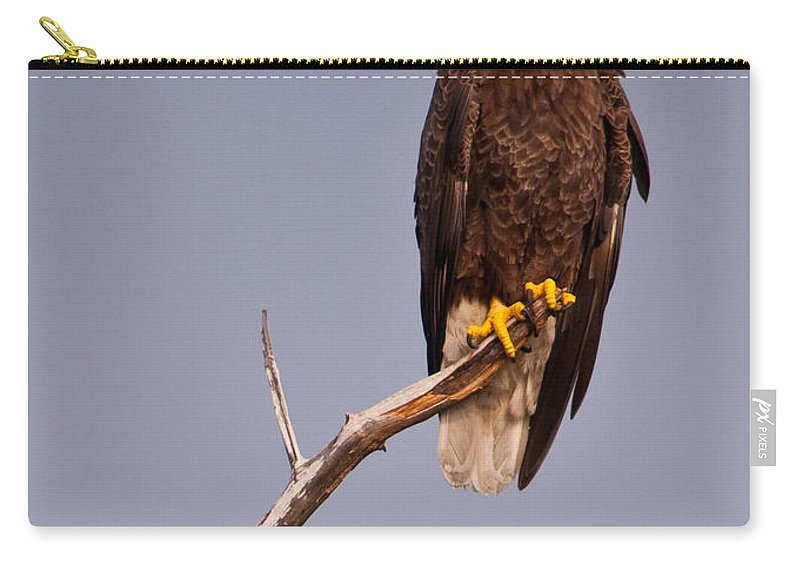 Bald Eagle Carry-all Pouch featuring the photograph Bald Eagle - Pride Of America by Christine Stonebridge