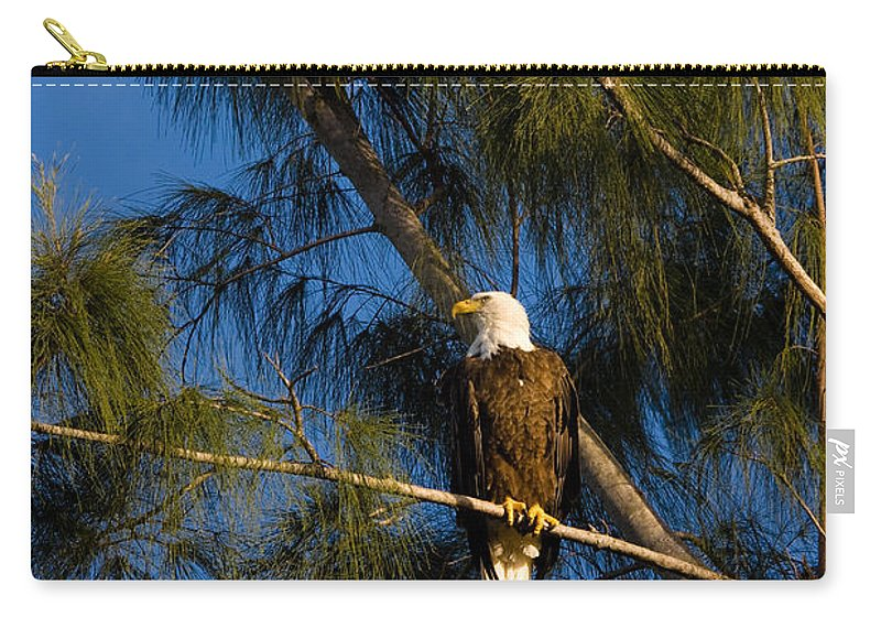 Bald Eagle Carry-all Pouch featuring the photograph Bald Eagle by Ed Gleichman