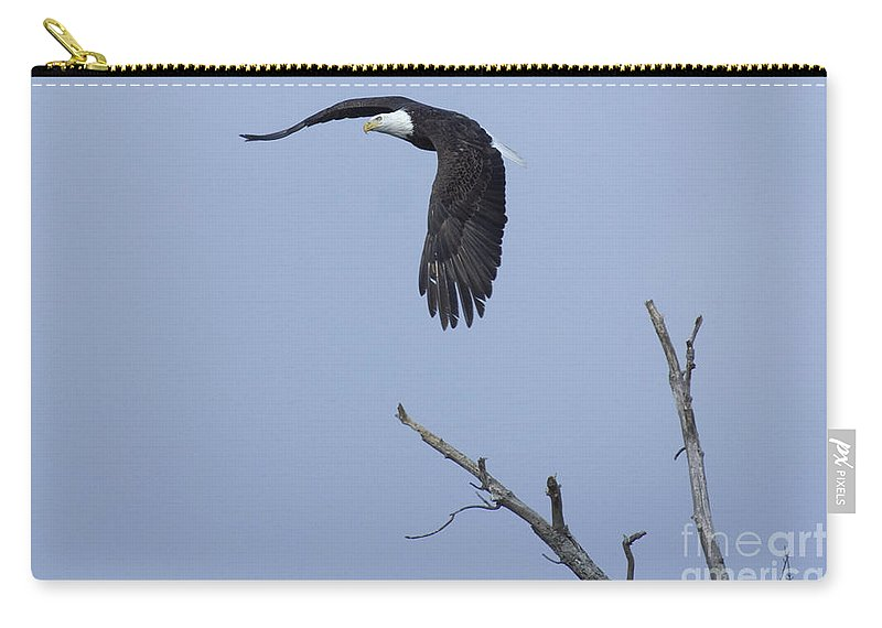 Animals Carry-all Pouch featuring the photograph Bald Eagle In Flight by Alan Look