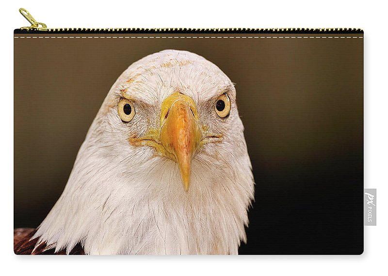 Bald Carry-all Pouch featuring the photograph Bald Eagle Looking In by Bill Dodsworth